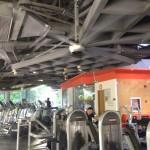 Diamond fan at gym